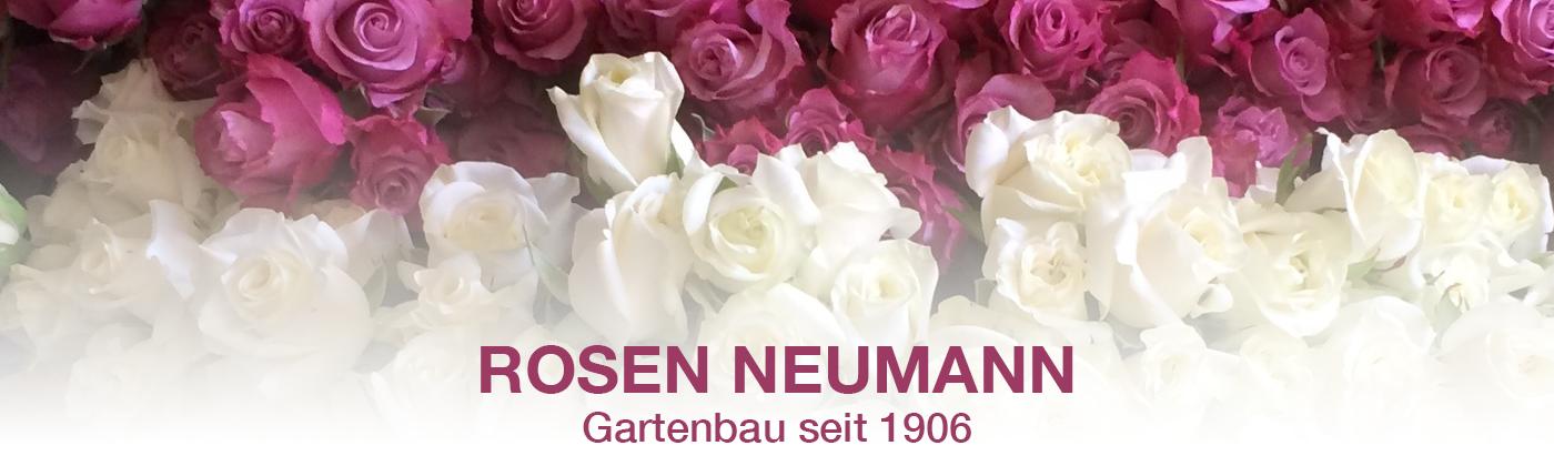 Rosen-Neumann